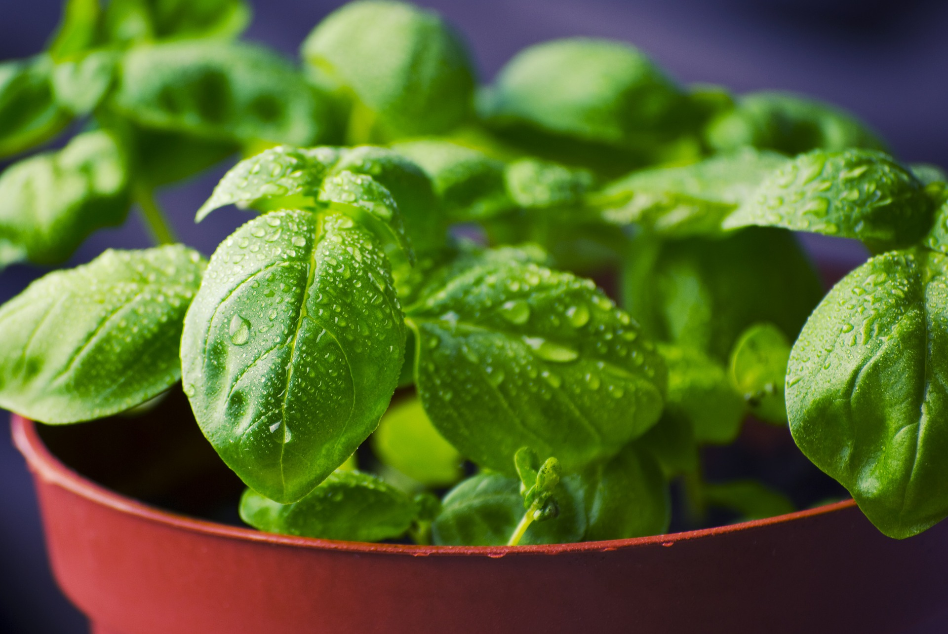 do it yourself crafts basil on a pot
